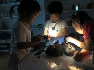 Curriculum Light And Construction   The Country School International School Bangkok