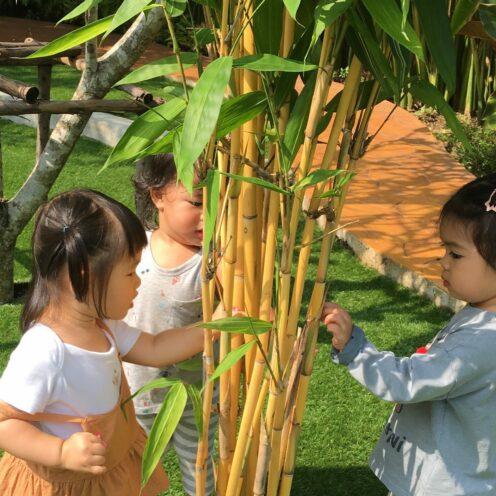 Learning From Nature | Purple Elephant 49 International School Bangkok