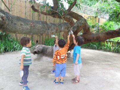 Playground | Purple Elephant 39 International School Bangkok